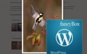 FancyBox для WordPress: настройки и функции