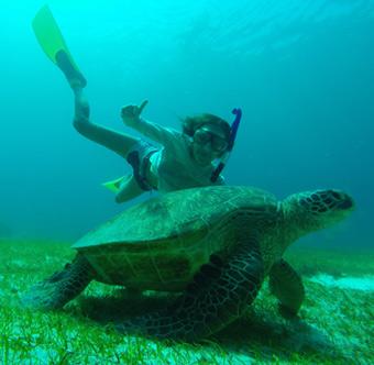 ныряю с черепахой
