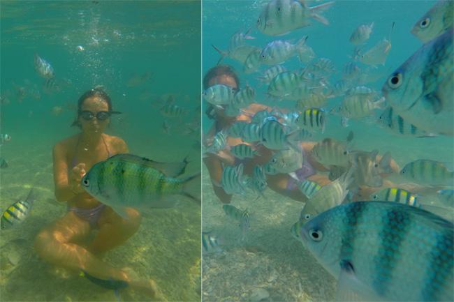 рыбы на необитаемом острове